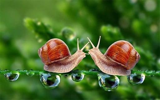 How Slow Too Slow Progress Relationship