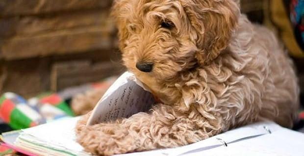 Dog Ate Homework Excuses