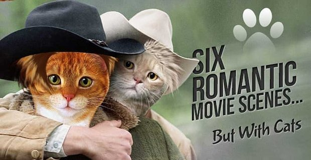 6 Romantic Movie Scenes But With Cats