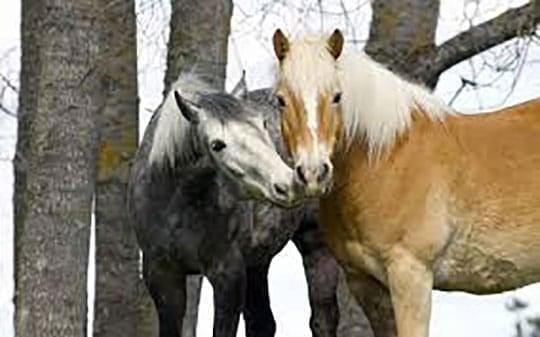 Huggy Horses