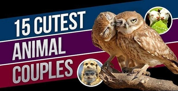 15 Cutest Animal Couples of All Time