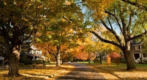 1. Newton, Massachusetts — 43,986 singles