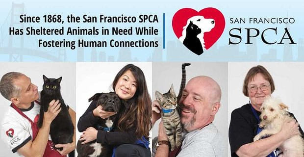 Sfspca Shelters Animals And Fosters Human Connections