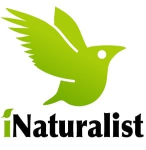 Photo of the iNaturalist logo