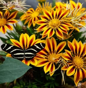 Photo of a butterfly on a bunch of flowers