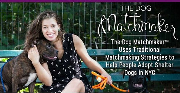 The Dog Matchmaker Traditional Matchmaking Strategies Connect People And Pups