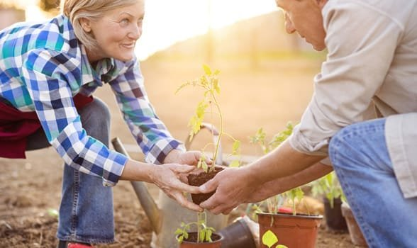 Photo of a couple gardening