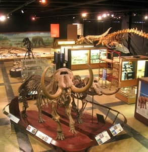 Photo of the University of Michigan Museum of Natural History