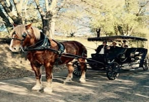 Photo of a horse-drawn carriage ride in Julian