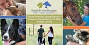 The Dumb Friends League Denver™: A Local Animal Shelter Fosters a Compassionate Community of 1,400+ Volunteers