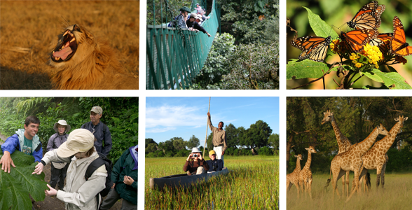 Collage of photos from Natural Habitat Adventure trips to Africa, Costa Rica, and Mexico