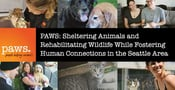 PAWS: Sheltering Animals and Rehabilitating Wildlife While Fostering Human Connections in the Seattle Area