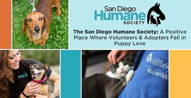 The San Diego Humane Society: A Positive Place Where Volunteers & Adopters Fall in Puppy Love
