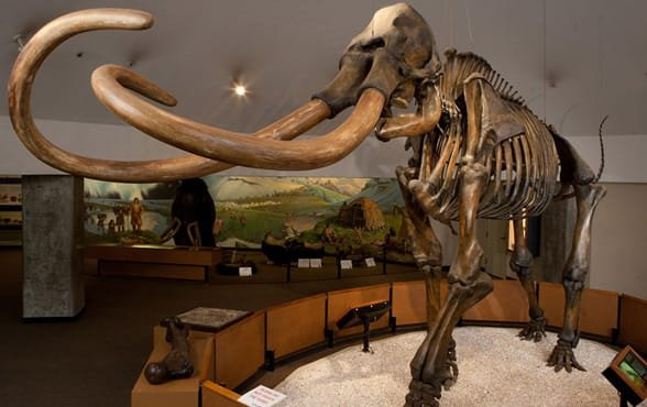 Photo of an exhibit at La Brea Tar Pits & Museum
