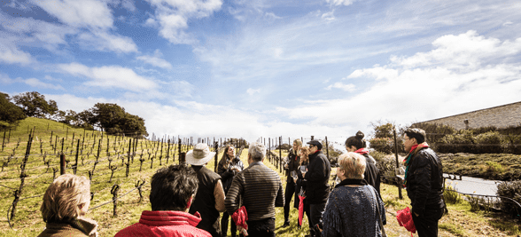Photo of an Extranomical Tours excursion in wine country