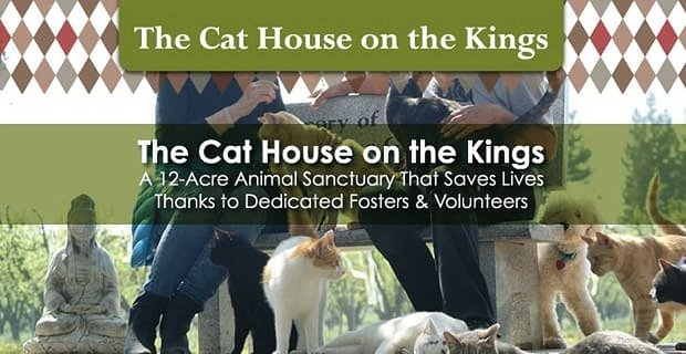 The Cat House On The Kings Is A 12 Acre Animal Sanctuary That Saves Lives