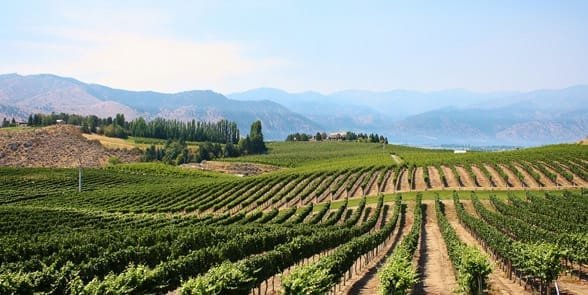 Photo of a winery in Lake Chelan