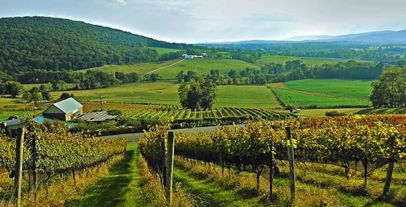 Photo of Hilsborough Vineyards in Loudoun County
