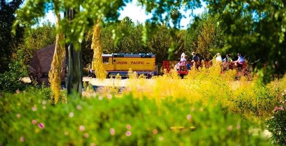 Photo of the train at Schenepf Farms