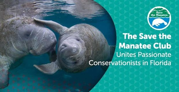 The Save the Manatee Club Unites Passionate Conservationists at Volunteer Events & Festivals in Florida