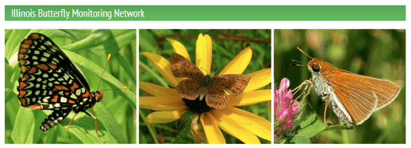 Screenshot of a Illinois Butterfly Monitoring Network banner
