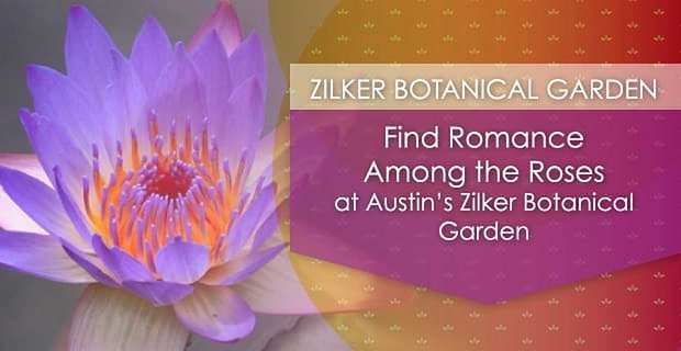 Find Romance Among the Roses at Austin's Zilker Botanical Garden