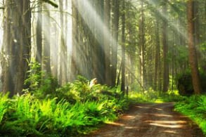 Screenshot of a forest from Healing Couples Retreats website