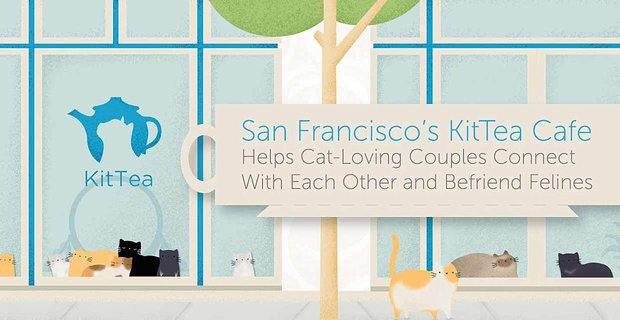Kittea Cafe Helps Cat Loving Couples Connect