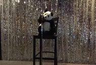 Singing Pandas Asian Restaurant & Bar