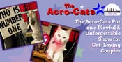 The Acro-Cats Put on a Playful & Unforgettable Show for Cat-Loving Couples