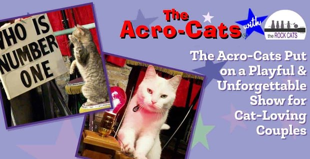 Acro Cats Put On Playful Show For Couples