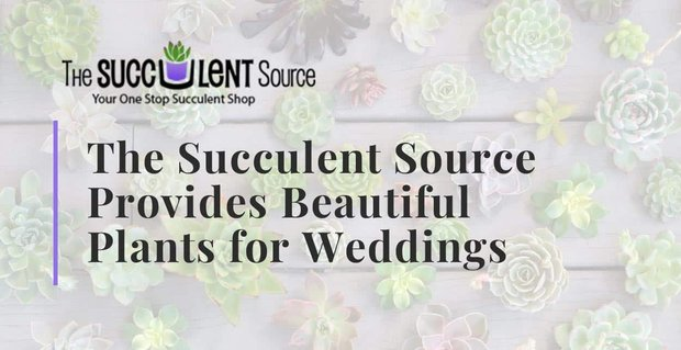 Succulent Source Provides Beautiful Plants For Weddings