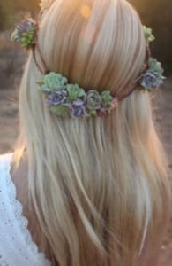 Photo of a succulent crown