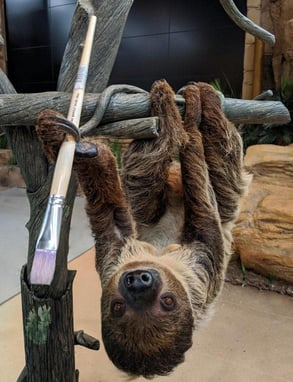Photo of Valentino the sloth with a paintbrush