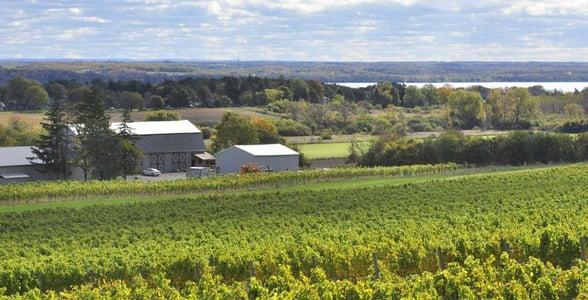 Photo of the Ravines vineyard on Seneca Lake