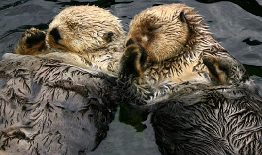 Open Otters