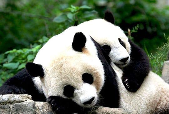 Partial Pandas