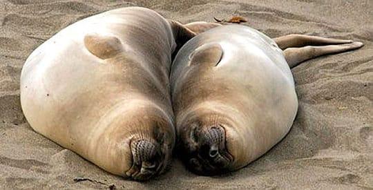 Sentimental Seals