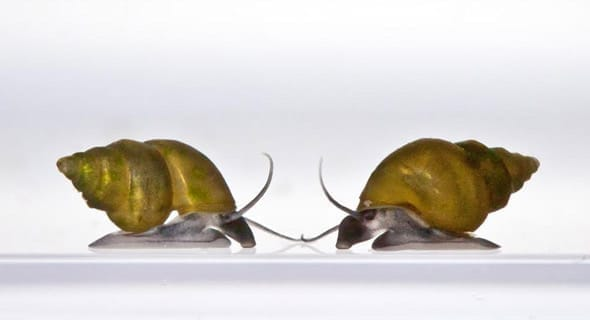 What do snails have to do with you?