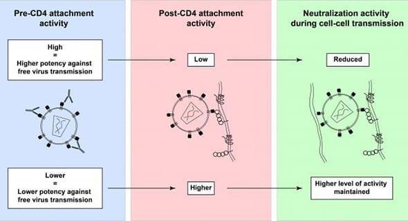 Study: Investigating Neutralized Antibodies for HIV Vaccine
