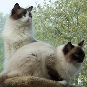 Photo of Murray and Sam, Sonny and Joan's cats