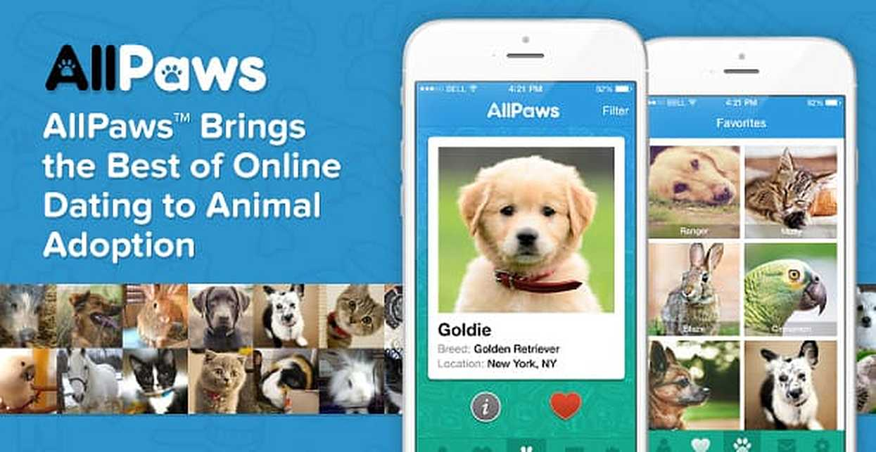 AllPaws™ Brings the Best of Online Dating to Animal Adoption With Pet Profiles & Search Functionality