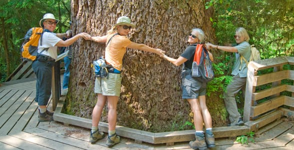 Photo of people hugging a tree