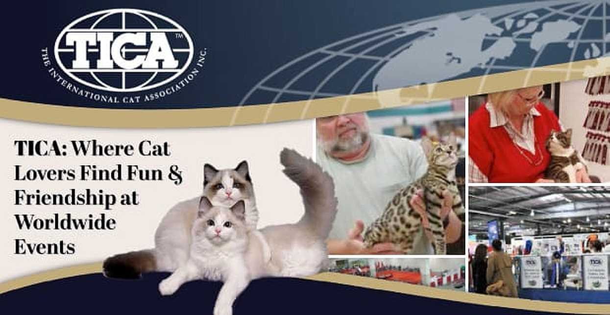 The International Cat Association (TICA): Where Feline Lovers Seek Out Fun & Friendship at Worldwide Events
