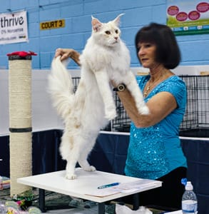 Photo of a TICA judge holding a cat