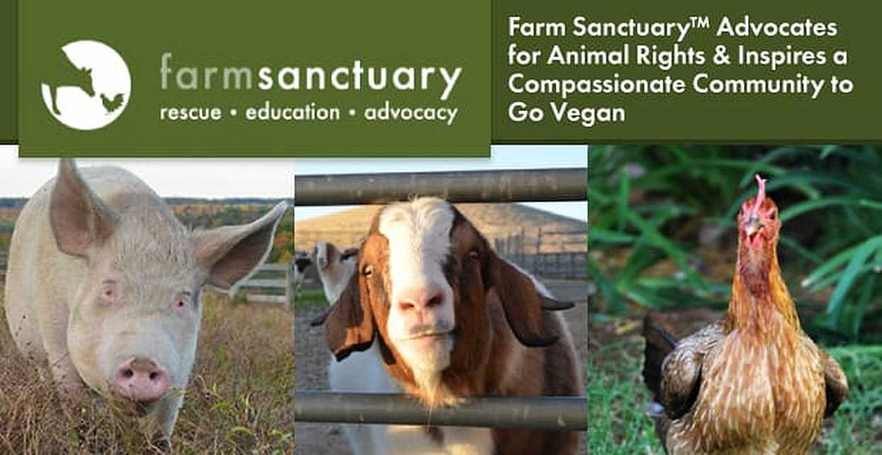Farm Sanctuary™ Advocates for Animal Rights & Inspires a Compassionate Community to Go Vegan