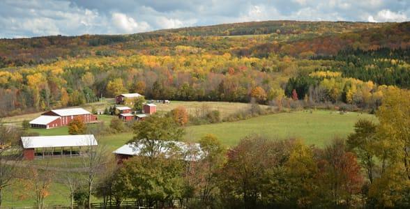 Photo of Farm Sanctuary in New York