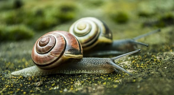 Photo of two snails