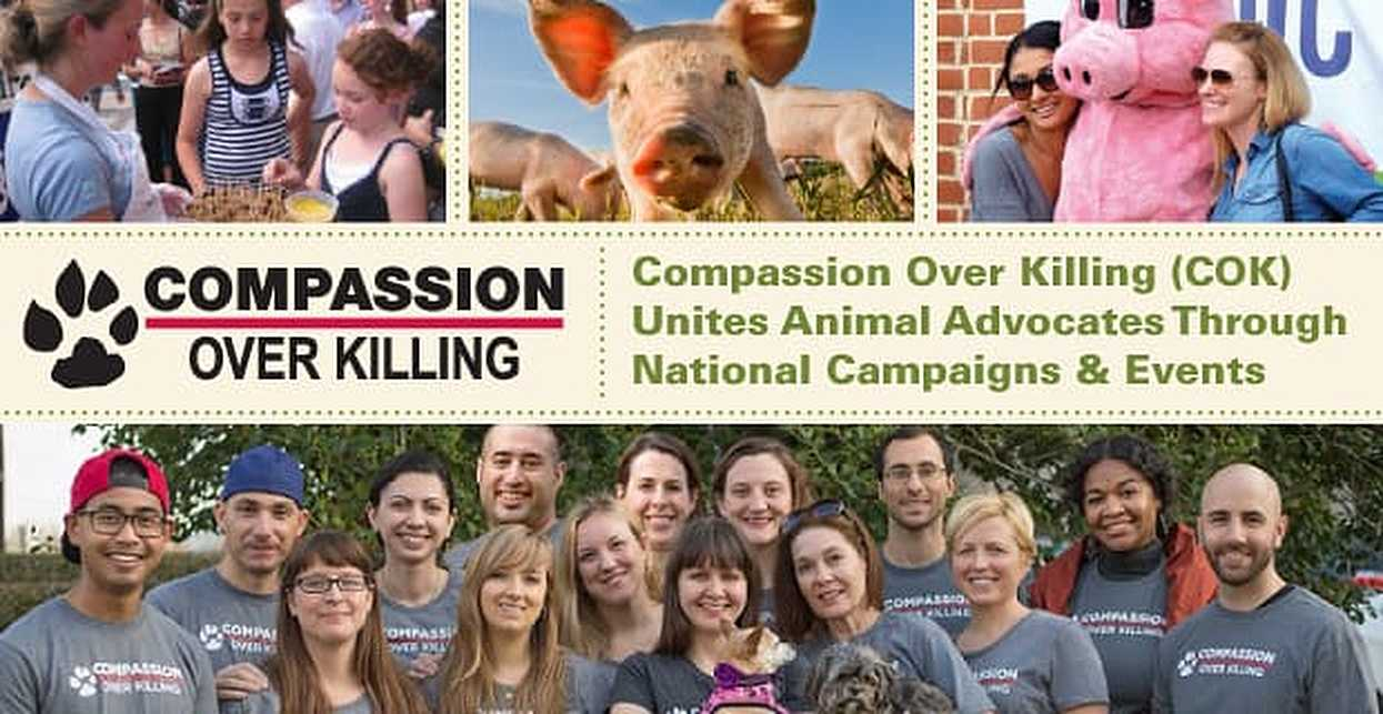 Compassion Over Killing (COK) Unites Animal Advocates Through National Campaigns & Events