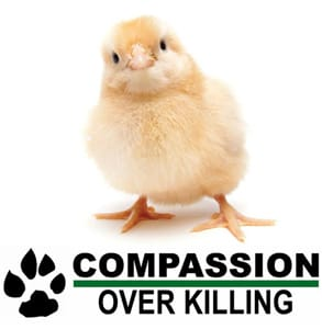Photo of the Compassion Over Killing logo